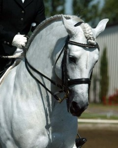 Horse show tips, horse riding, hunter judge, laura Kelland-May, thistle Ridge Skill Builders