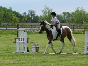 Horse riding, horse training, thistle Ridge skill Builders, hunter judge, hunter jumper, show ring hunter, horse riding, Laura Kelland-May, Thistle Ridge Stables, Horse show judge