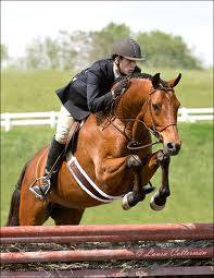 horse, horse riding, hunter jumper, Laura Kelland-May, Thistle Ridge Skill Builders