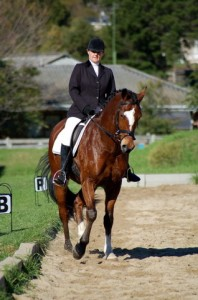 Classical Dressage, Dressage training, horse training, horse riding, hunter judge, show ring hunter
