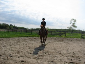 Horse training, dressage training, straighten your horse, horse trainer ottawa, horse trainer canada, laura kelland-may