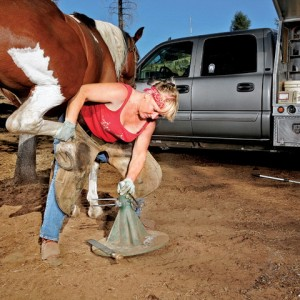 How to end it with your farrier, stable management, hoof care, horse care, horse