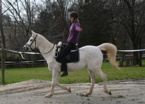 using Pilates to improve your riding position, horse riding, horse training, improve your riding position, exercises to improve your riding position, Laura Kelland-May, Thistle Ridge Stables, Thistle ridge Skill Builders, HOrse Training Ontario, Horse Training Ottawa